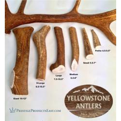 Premium Quality Grade A - Elk Antlers | PrestigeProductsEast.com