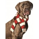 Chilly Dog White / Red Scarf | PrestigeProductsEast.com