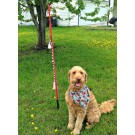 Large Tether Tug w/ Rope Toy for dogs Under 35 - 60 pounds