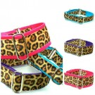Soft Kitty Exclusive Collar and Leads | PrestigeProductsEast.com